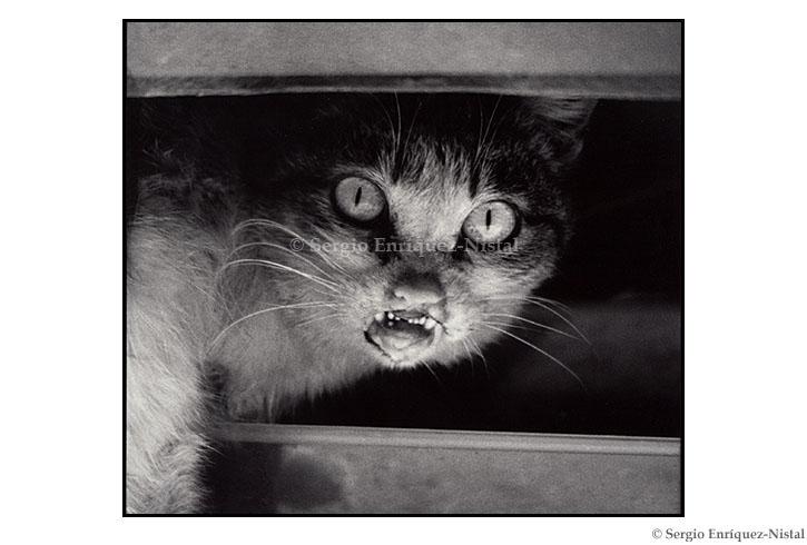 Cat of Incredible Eyes