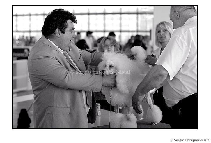 Dog Beauty Contest