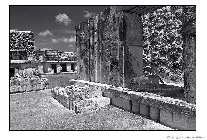 Dog in the ruins of Uxmal Mexico