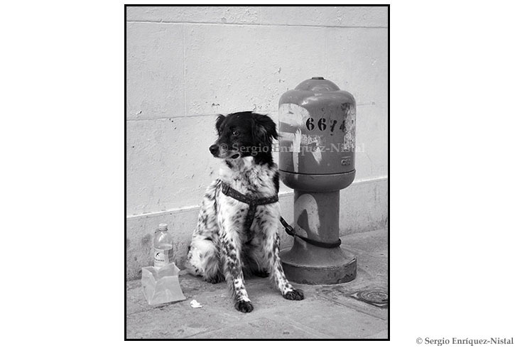 Portrait of a Dog Venice Italy