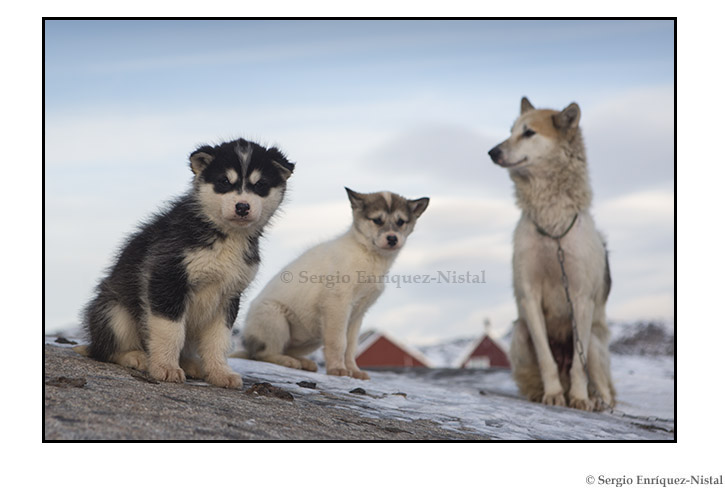 Iceberg, Iceberg, Ilulissat, Greenland