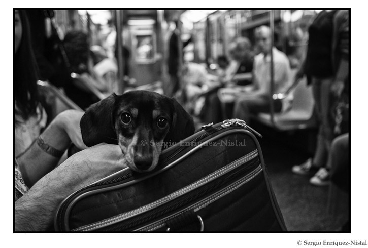 Dog in the Subway Street Photography New York City