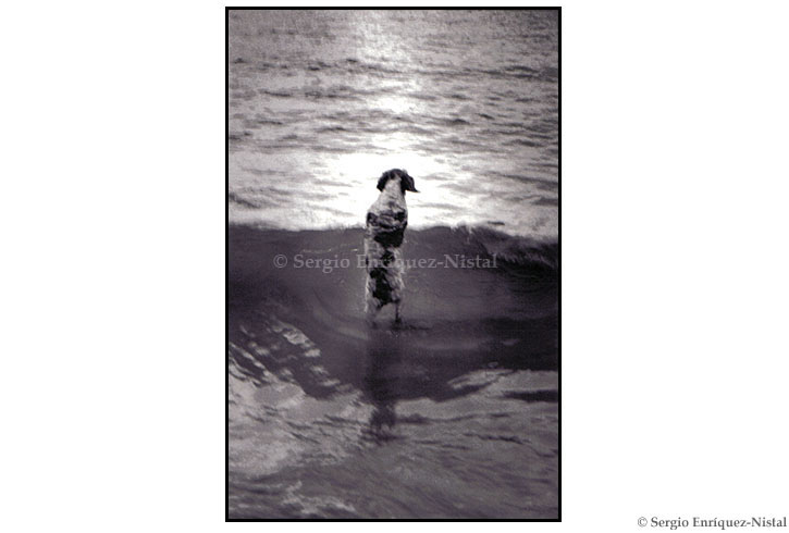 Dog in the Sea Mataleñas Santander